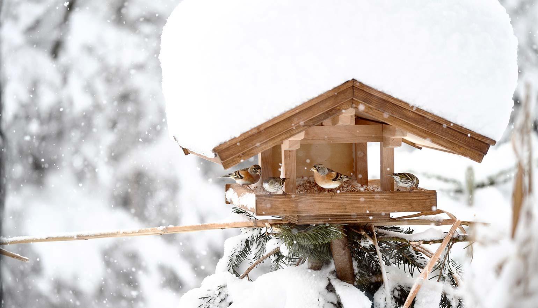 zuhaeusl-am-chiemsee-impressionen-winter-content-2