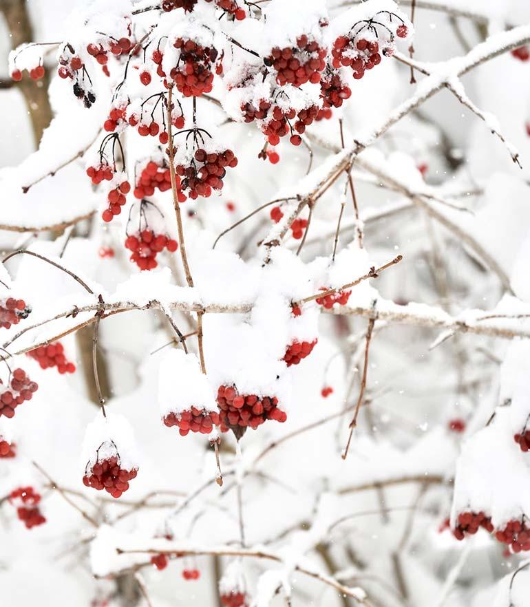 zuhaeusl-am-chiemsee-impressionen-winter-content-3