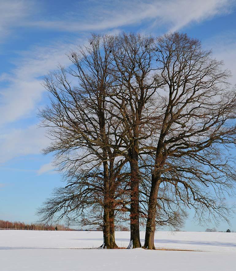 zuhaeusl-am-chiemsee-impressionen-winter-content-4